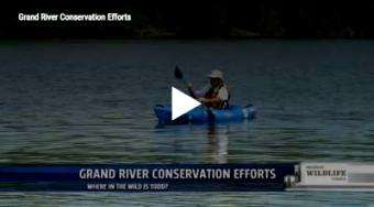 Grand Rapids Whitewater: GR Paddling's conservation of the Grand River with the Grand Rapids Whitewater Project