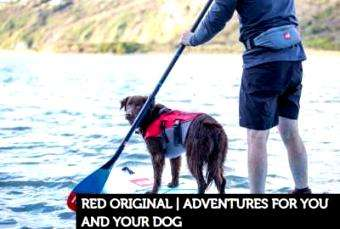 SUP International: Red Original | Adventures for You and Your Dog