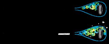 Hyper Paddle 13º Carbon/Fiberglass - _hypercore-1390151840