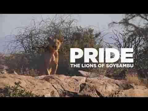 Pride; The Lions of Soysambu Teaser Trailer